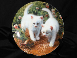 A Chance Meeting White American Short Hairs Collector Plate