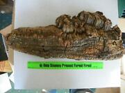 Cork Bark