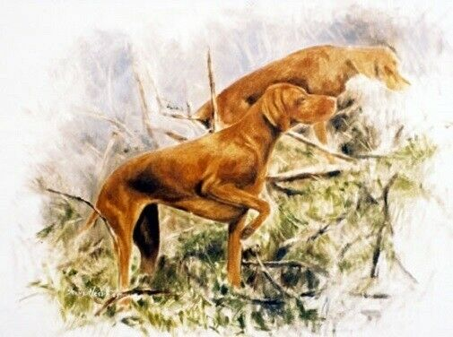 Vizsla Limited Edition Art Print Rough Terrain by Steven Nesbitt*