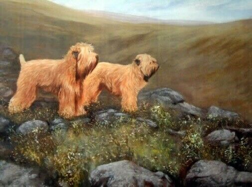 Soft Coated Wheaten Terrier Limited Edition Print The Valley by Steven Nesbitt*