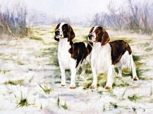 Welsh Springer Spaniel LimEd Art Print First Snow of Winter Steven Nesbitt*
