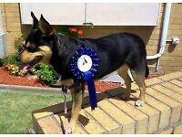 Animal-loving pet sitter, dog walker available, central Edinburgh