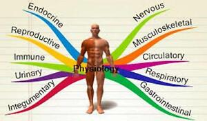 PHYSIOTHERAPY/ MASSAGE THERAPY/CHIROPRACTOR/ACUPUNCTURE