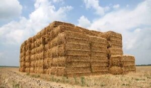 Hay dry cow feed and milking hay Colac Colac-Otway Area Preview