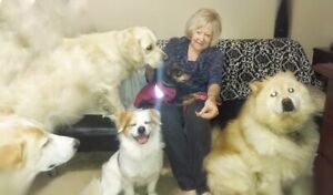 RELIABLE DOG BOARDING AND DAYCARE FROM MY HOME