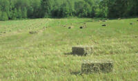 2015 First Cut HORSE HAY - Orchard Grass / Brome / Timothy Mix
