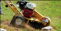 50% off stump removal / Grinding.