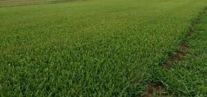 Stewart's Farm Turf and Lucerne Maitland Maitland Area Preview