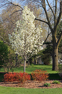 Landscape trees for private property