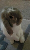 friendly bunny needs new home ASAP