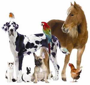 PROFESSIONAL DOG WALKING & PET CARE SERVICES