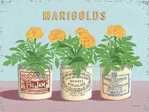calendulas-Flor-Vintage-BOTES-CASA-O-Jardin-bano-cocina-Mini-Metal-Letrero-de