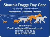 Shaun's doogy day care & pet care-dog walking/pet carer/pet taxi/pet visits/dog walker/cat sitting/