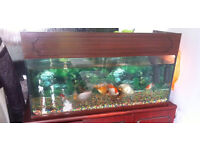 Fishes and Fish Tank for Sale