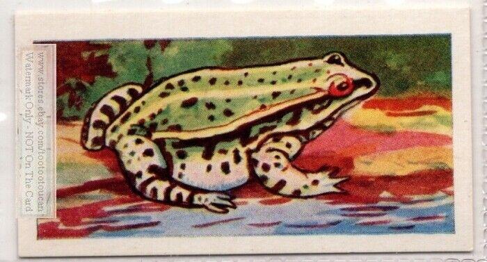 Edible Frog Amphibian Vintage Trade Ad Card