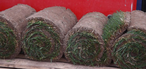 you need grass send us a message!!!