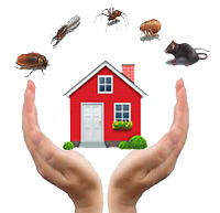 WASPS? ROACHES? BEDBUGS? PESTS?- #1 PEST CONTROL MISSISSAUGA,GTA