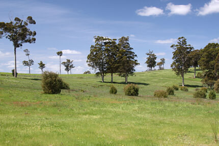 BONUS - $20,000 worth of Truffle Trees! Pemberton Manjimup Area Preview