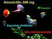Aquatic Amoxicillin
