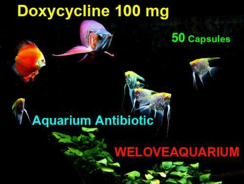 Doxycycline: Fish & Aquariums | eBay