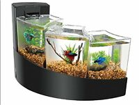 Triple betta tank with filter and moss rock