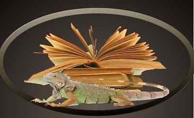 L'Iguane qui lit