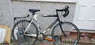 Barracuda racer bike