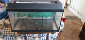 Fish Tank with faulty light unit