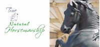 Horseback riding lessons for beginners and experienced riders