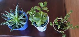 Veg n fruit plants