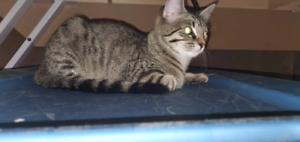 Free kitten for rehoming