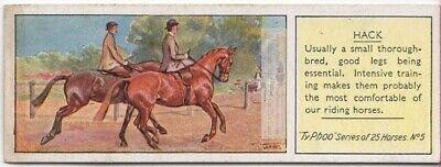 Hack Hackney Horse Breed British Equine c80 Y/O Trade Ad Card for sale  USA