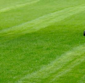 Grass cutting service reasonable prices