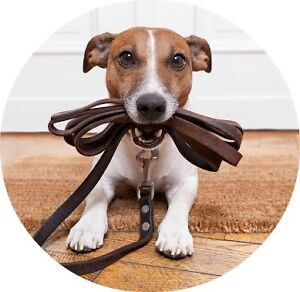 Dog Walking Services Cronulla Sutherland Area Preview