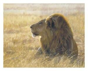 LION Wildscapes Poster: Danger on the Wind, by John Banovich