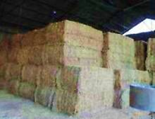 HAY FOR SALE, All varieties bulk or single, HORSE QUALITY Moss Vale Bowral Area Preview