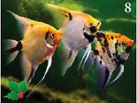Tropical Fish Bargain Pack C