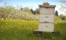 Unwanted beehive and bee keeping equipment? Chelsea Kingston Area Preview