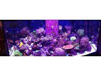 marine finger coral