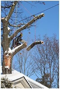Tree cutting service available