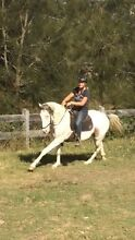 Stunning appy gelding. Haigslea Ipswich City Preview