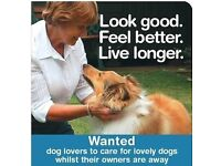 Would you like to volunteer to look after a dog for a week or two?