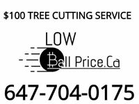 Tree removal $100..... 647-704-0175
