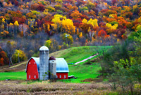 Farm & Cottage Insurance. We Have You Covered.  905-484-2610