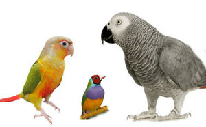 Parrot Grooming Available