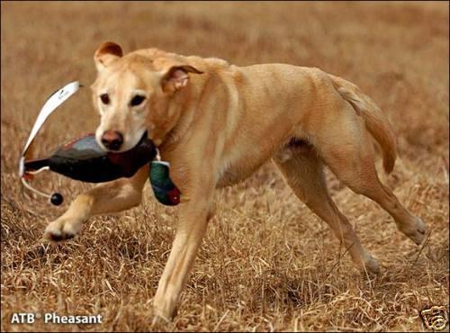 Avery Sporting Dog Greenhead Gear EZ Bird ATB Pheasant Training Bumper Dummy