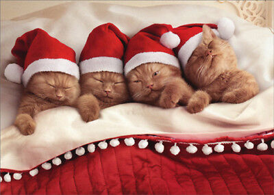 Kittens Nestled In Bed Avanti Cute Cat Christmas Card ()