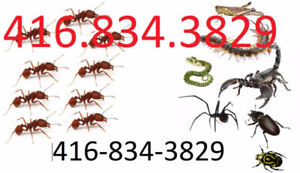 Bed Bugs Removal  , 416-834-3829  , Roaches,Mouse, Rat Control