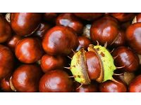 half a bag of conkers