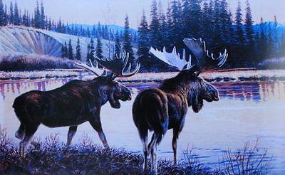Moose at Sunset Water
